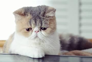 オトナ女子の人気猫「ちくわ」ちゃん