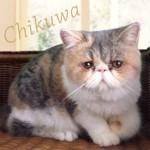 中原亜紀(篠原涼子)飼い猫「ちくわ」ちゃん