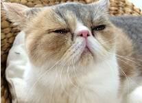 中原亜紀(篠原涼子)飼い猫「ちくわ」ちゃん?