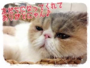 「オトナ女子(公式ツイッターより)」中原亜紀(なかはら あき)のペット・飼い猫「中原ちくわちゃん」