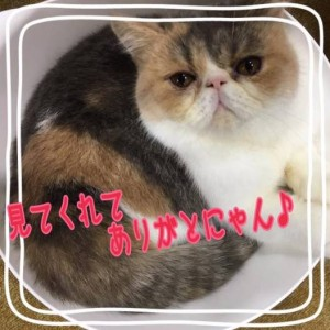 中原亜紀(なかはら あき)のペット・飼い猫「中原ちくわちゃん」みてくれてありがとにゃん♪