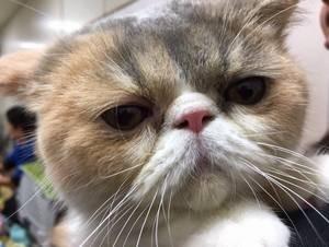 オトナ女子公式ラインより、人気ペット猫の中原ちくわちゃん