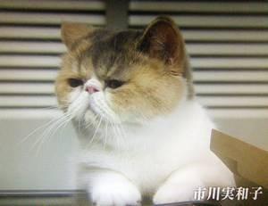 オトナ女子中原亜紀(篠原涼子)飼い猫「ちくわ」ちゃん4話