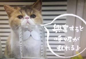 オトナ女子中原亜紀(篠原涼子)飼い猫「ちくわ」ちゃん4話コップがいい感じ