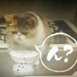 オトナ女子中原亜紀(篠原涼子)飼い猫ちくわちゃん5話ん?何のこと話してるの?