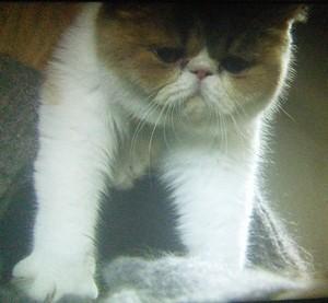 オトナ女子中原亜紀(篠原涼子)飼い猫ちくわちゃん5話持ち上げられる