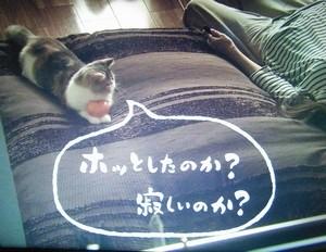 オトナ女子6話中原亜紀(篠原涼子)飼い猫ちくわちゃんみかん持って亜紀に語りかける