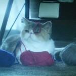 ドラマオトナ女子第8話の猫ちくわちゃん毛糸まみれ画像2