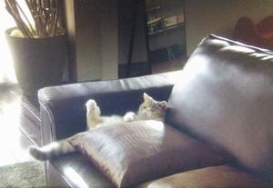 ドラマオトナ女子8話、自宅にてのんびりソファでくつろいでいるちくわちゃん画像2