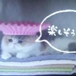 ドラマオトナ女子8話ちくわちゃんシャンプーハット画像バスタオルにのってます楽しそうといってましたね