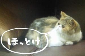 ドラマオトナ女子9話の、猫の中原ちくわちゃん1