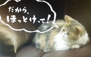 ドラマオトナ女子9話の、猫の中原ちくわちゃん2