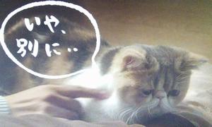 ドラマオトナ女子9話の、猫の中原ちくわちゃん5