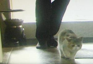 オトナ女子9話猫ちくわちゃん!亜紀のマンションキッチンにて2