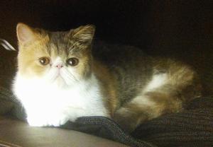 オトナ女子9話猫ちくわちゃん!亜紀のマンションの部屋にて1