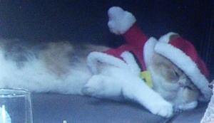オトナ女子10話、最終回、サンタクロースコスプレちくわちゃんソファで寝てる