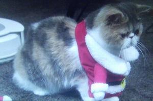 オトナ女子10話、最終回、サンタクロースコスプレちくわちゃん服はこうなってたんですね