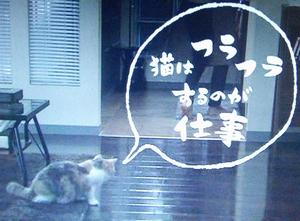 オトナ女子10話、最終回猫はフラフラするのが仕事