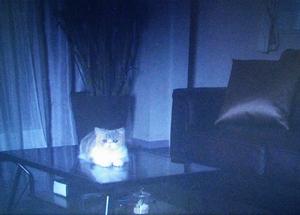オトナ女子10話最終回、さびしくポツンと家で亜紀の帰りを待つちくわ