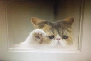 オトナ女子10話、最終回、亜紀と高山がラブラブ。しめだされる猫のちくわちゃんアップ