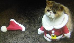 オトナ女子10話、最終回、猫のちくわちゃん、最後のブルーレイの予告の猫ちくわちゃん