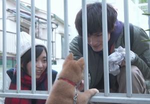 月9ドラマ「いつかこの恋を思い出してきっと泣いてしまう(いつ恋)」の柴犬画像3