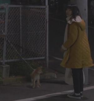 月9ドラマ「いつかこの恋を思い出してきっと泣いてしまう(いつ恋)」の柴犬画像9