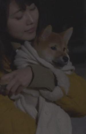 月9ドラマ「いつかこの恋を思い出してきっと泣いてしまう(いつ恋)」の柴犬画像11
