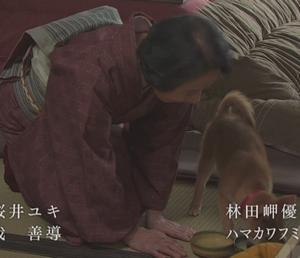 月9ドラマ「いつかこの恋を思い出してきっと泣いてしまう(いつ恋)」の柴犬画像15