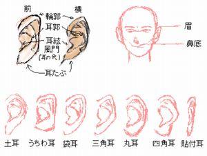 耳の形には色々あるイラスト