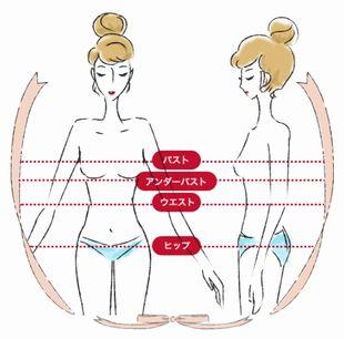 バストサイズ・スリーサイズの図(トリンプ公式より)