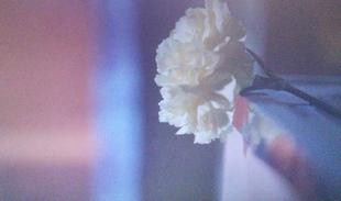 砂の塔8話ハーメルン事件の犯人がその口笛を吹いて、黄色い花(黄色いカーネーション)を置いて立ち去るシーン3