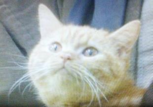 おんな城主直虎で龍潭寺の南渓和尚(なんけいおしょう)が抱っこしていた猫の名前は「りのちゃん?」