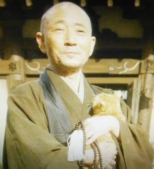 おんな城主直虎で龍潭寺の南渓和尚(なんけいおしょう)が抱っこしていた猫の種類は日本猫?