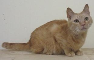 おんな城主直虎で南渓和尚が抱っこしていた猫はグローバル・アニマルアクトのタレント猫ちゃん「りのちゃん」?