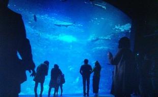 突然ですが明日結婚しますロケ地元彼「こうちゃん」とデート新江ノ島水族館2