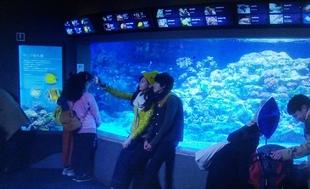 突然ですが明日結婚しますロケ地元彼「こうちゃん」とデート新江ノ島水族館3