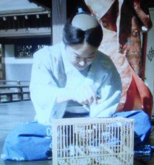 三河のぼんやり竹千代(松平元信・家康)…役者:阿部サダヲ【あべさだを・あべさだお】