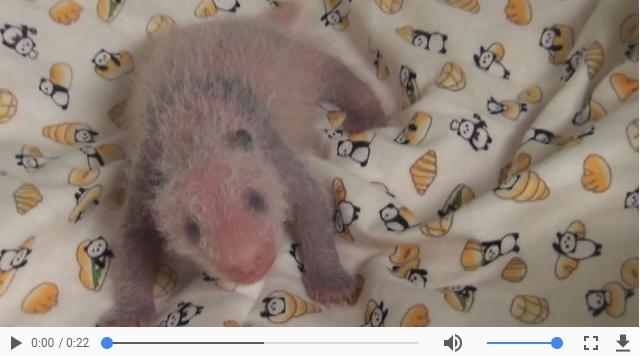 上野動物園のパンダの赤ちゃん子供の一般公開はいつ?中国のレンタル料は?や経済効果3