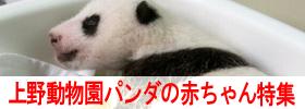 pandaakatyan